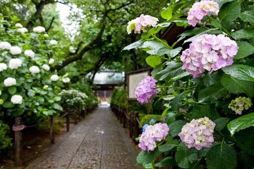 妙楽寺の入り口