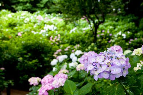 妙楽寺の中庭