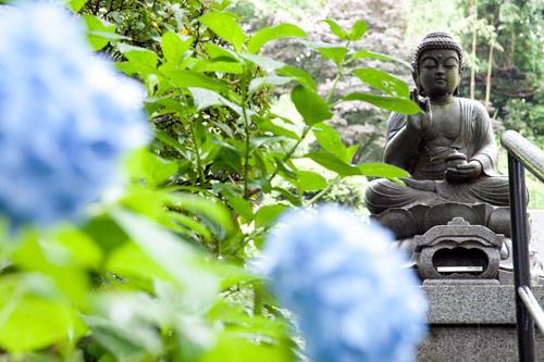 仏像とあじさい