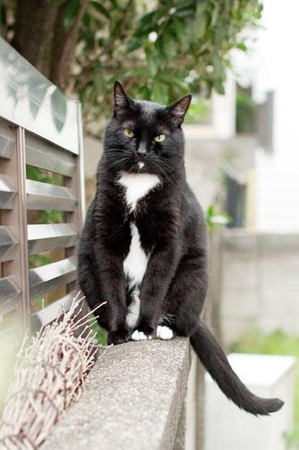 黒ネコのエピ