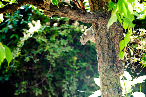 木から覗くリス