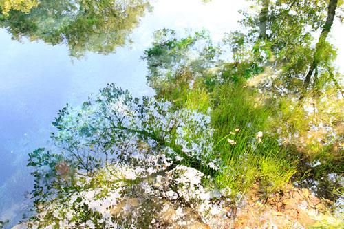 池に写る景色