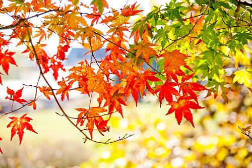 秋の移ろい