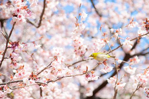 春の家族写真の出張撮影@新宿
