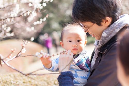 桜の枝に触れる男の子