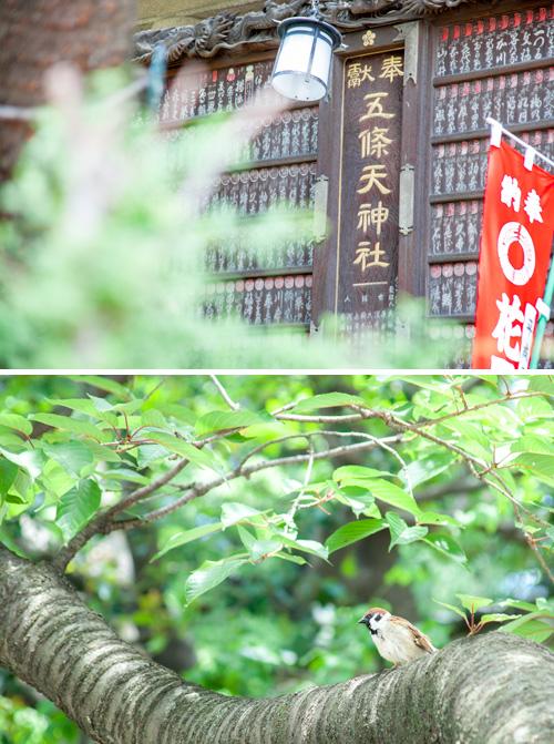 すずめと神社の風景