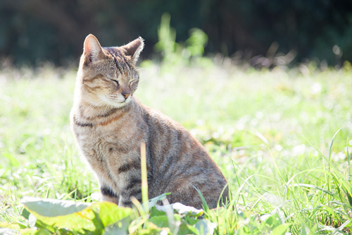 陽だまりのネコ