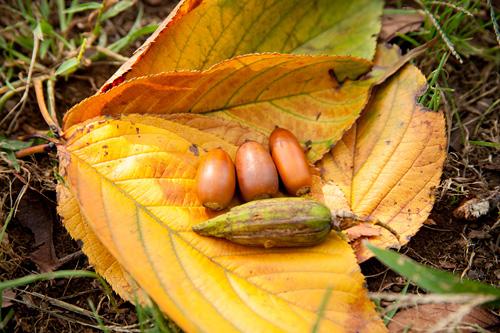 秋の収穫物