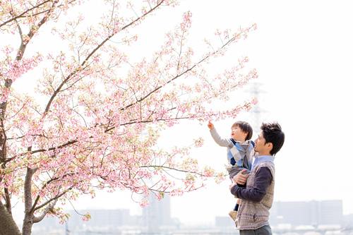 桜の花びらを観察するお父さまと弟さん