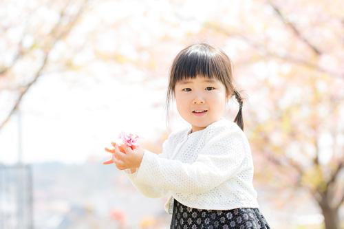 桜の花びらを集める妹さん