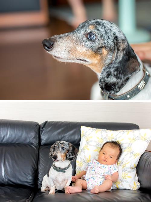 犬と女の子のツーショット